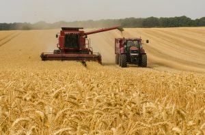 Uncertainty in the Wheat Markets